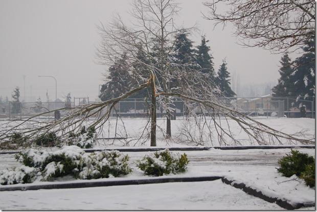 Storm Damage 017